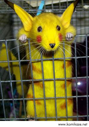 hamsteri-sariya-boyayip-pokemon-diye-sat..._22014.jpg